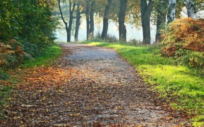 Is Autumn Indeed The Best Time of The Year For A Removal?